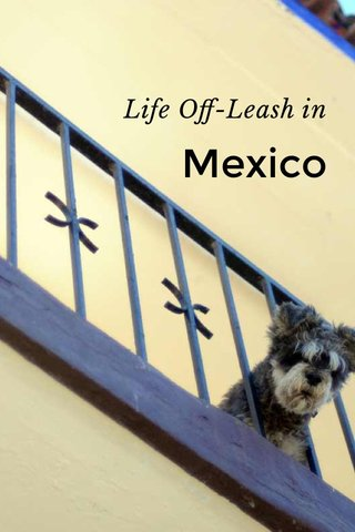 Life Off-Leash in Mexico