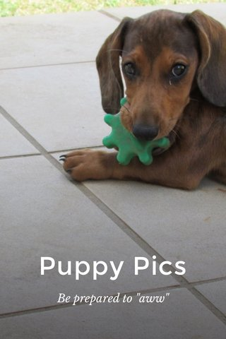 """Puppy Pics Be prepared to """"aww"""""""