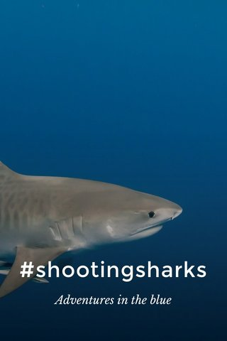 #shootingsharks Adventures in the blue
