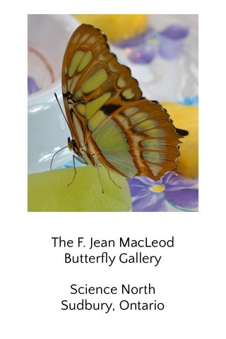 The F. Jean MacLeod Butterfly Gallery Science North Sudbury, Ontario