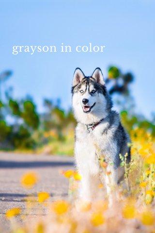 grayson in color