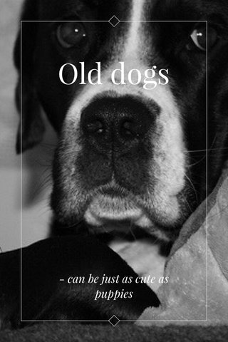 Old dogs - can be just as cute as puppies