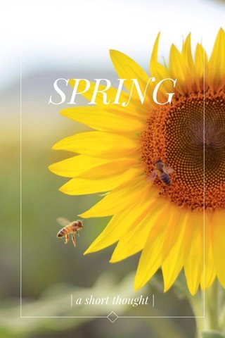 SPRING | a short thought |
