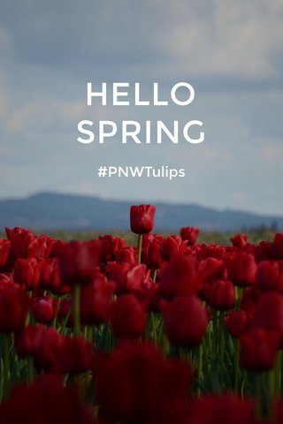 HELLO SPRING #PNWTulips