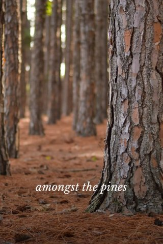 amongst the pines