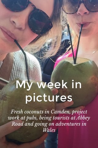 My week in pictures Fresh coconuts in Camden, project work at pubs, being tourists at Abbey Road and going on adventures in Wales