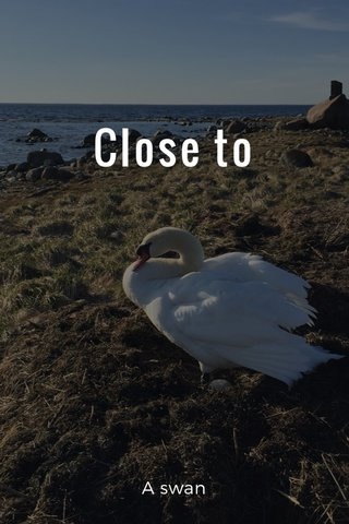 Close to A swan