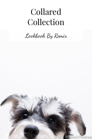 Collared Collection Lookbook By Remix