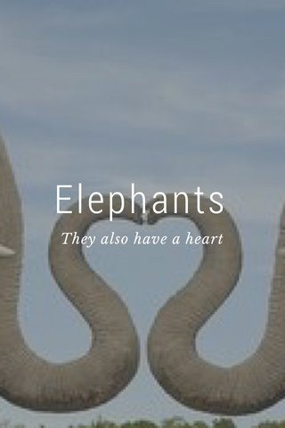 Elephants They also have a heart