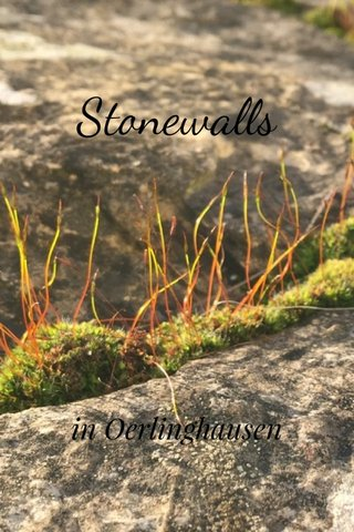 Stonewalls in Oerlinghausen