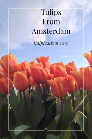 Tulips From Amsterdam TulipFestival 2015