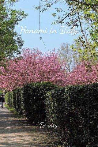 Hanami in Italy Ferrara