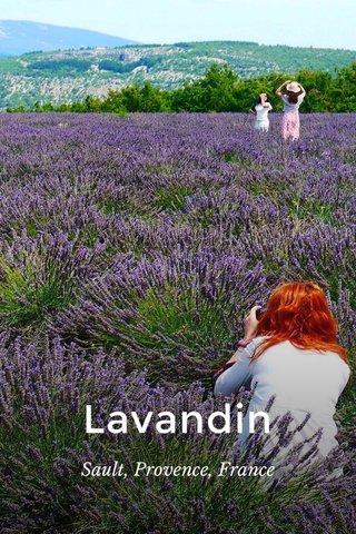Lavandin Sault, Provence, France