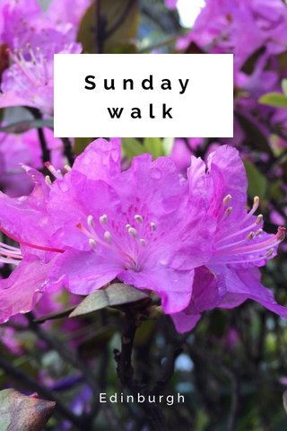 Sunday walk Edinburgh
