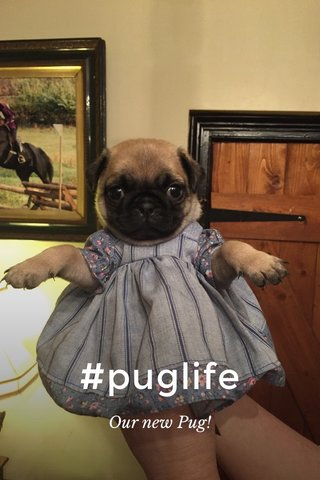 #puglife Our new Pug!