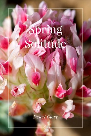 Spring Solitude Desert Glory