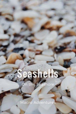 Seashells On the Seashore Macro Adventures