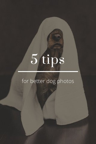 5 tips for better dog photos