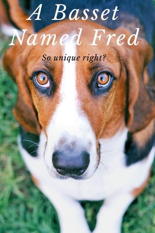 A Basset Named Fred So unique right?