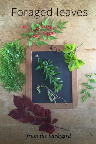 Foraged leaves from the backyard