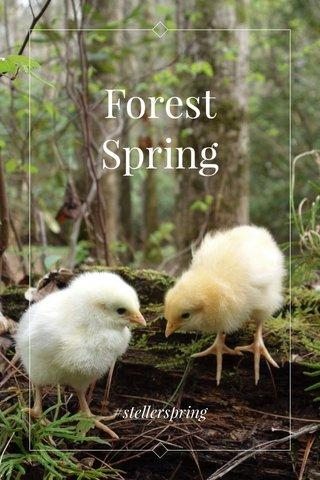 Forest Spring #stellerspring