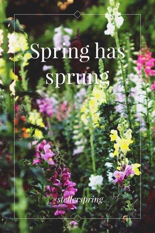 Spring has sprung #stellerspring