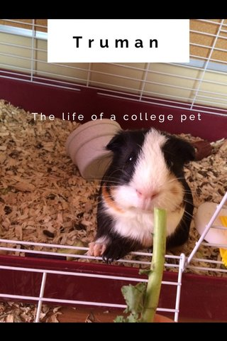 Truman The life of a college pet