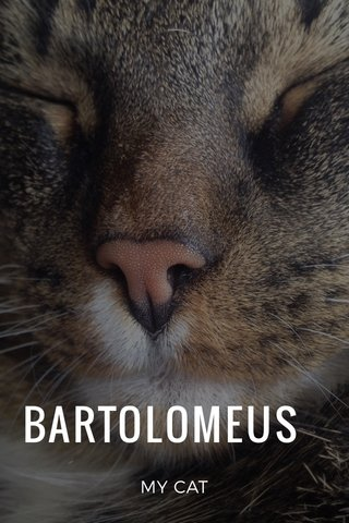 BARTOLOMEUS MY CAT