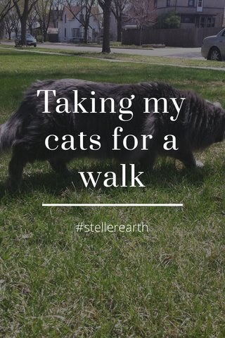 Taking my cats for a walk #stellerearth