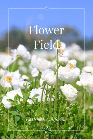Flower Field Carlsbad, California