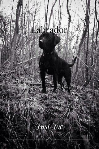 Labrador Just Joe