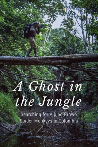 A Ghost in the Jungle Searching for Albino Brown Spider Monkeys in Colombia
