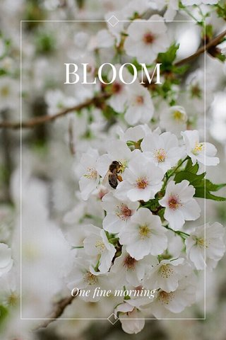 BLOOM One fine morning