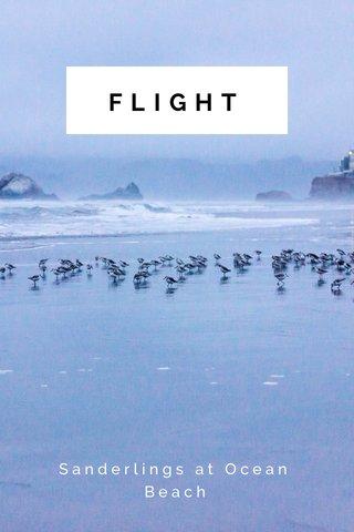 FLIGHT Sanderlings at Ocean Beach