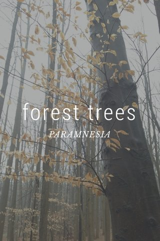 forest trees PARAMNESIA