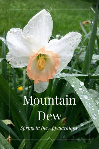Mountain Dew Spring in the Appalachians