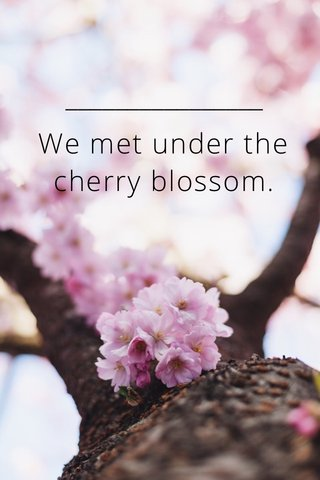 We met under the cherry blossom.