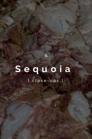 Sequoia   close-ups  