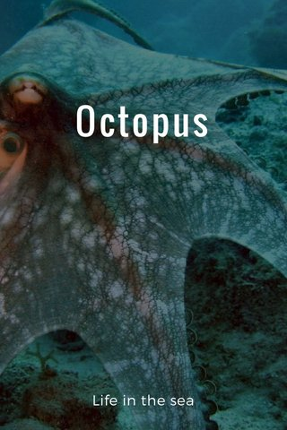 Octopus Life in the sea