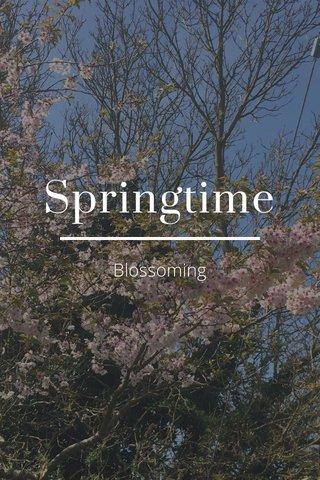 Springtime Blossoming