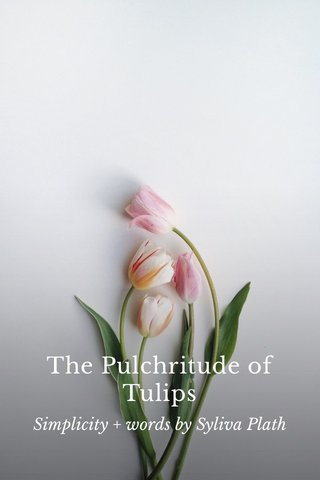 The Pulchritude of Tulips Simplicity + words by Syliva Plath