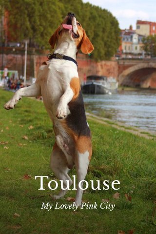 Toulouse My Lovely Pink City