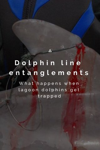 Dolphin line entanglements What happens when lagoon dolphins get trapped