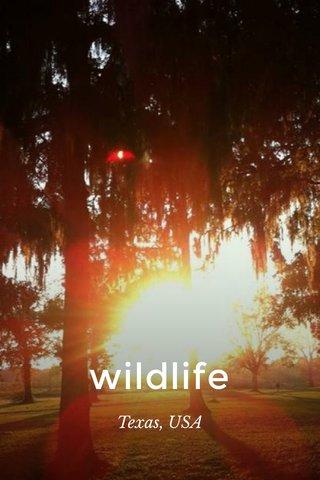 wildlife Texas, USA