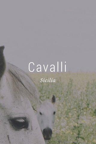 Cavalli Sicilia