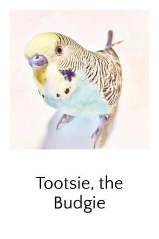 Tootsie, the Budgie