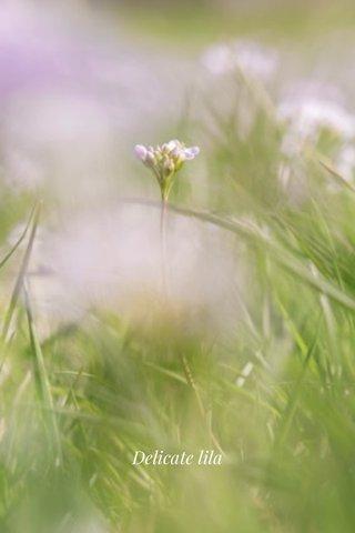 Delicate lila