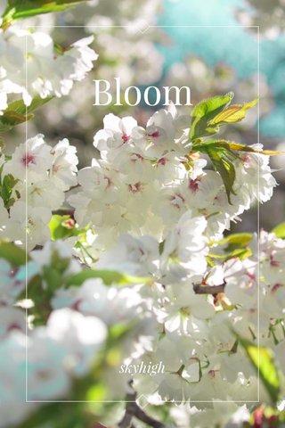 Bloom skyhigh
