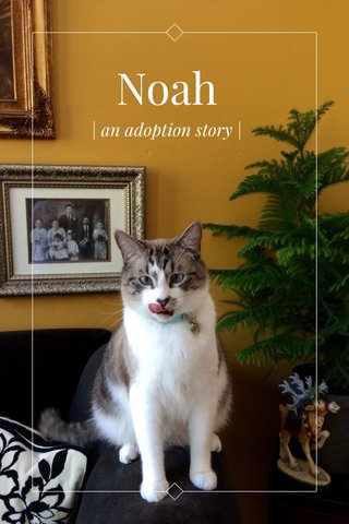 Noah | an adoption story |