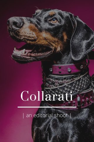 Collarati | an editorial shoot |